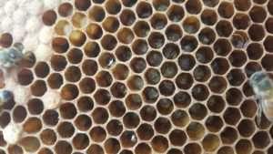 bee comb
