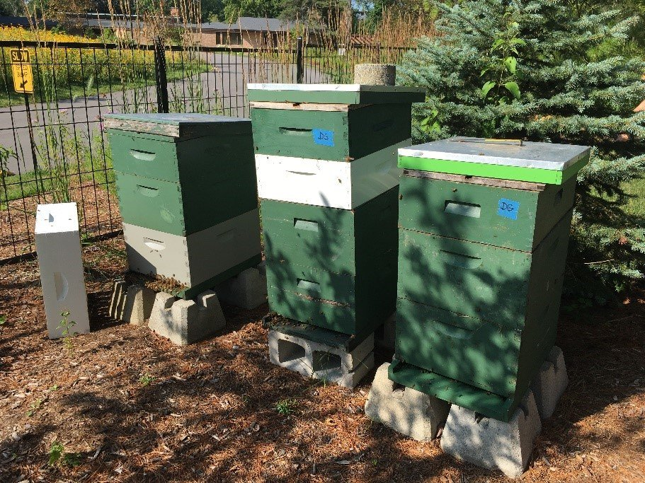 Bee hives at Whiting Forest