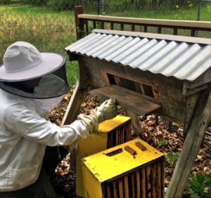 Beekeeper with time bar hive