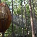 Canopy Walk Pods in forest with rope bridge